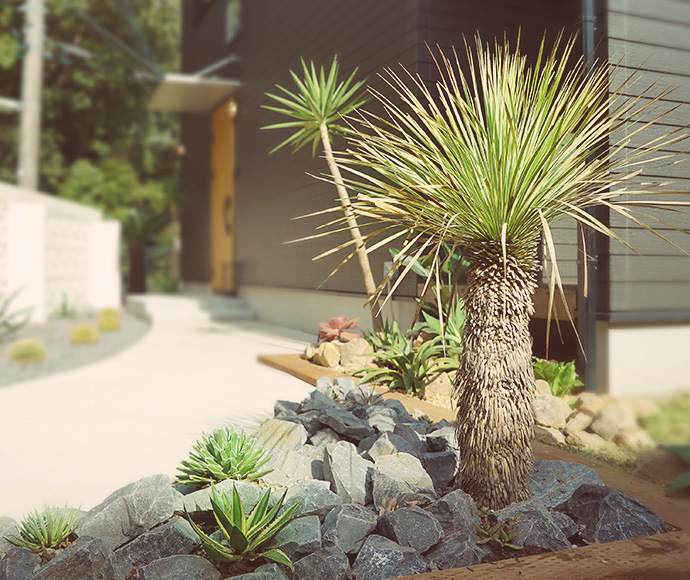 千葉県のゼロキューブ マリブ(ZERO-CUBE MALIBU)モデルハウスにあるドライガーデン ユッカロストラータ